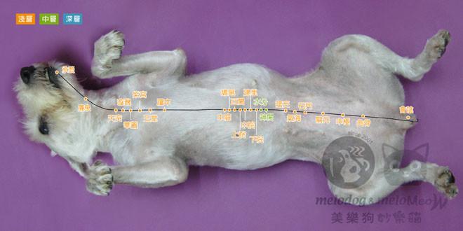 <一陽指與馬殺雞>毛孩犬貓經絡穴位圖集應用:幫助毛孩增進腸胃功能的穴位