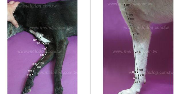 【講座4】犬貓經絡穴道與低能量雷射照護入門