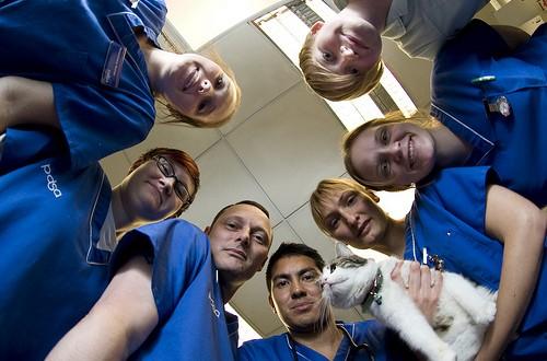 2013年世界小動物獸醫協會(WSAVA)給獸醫及家長的預防接種指南