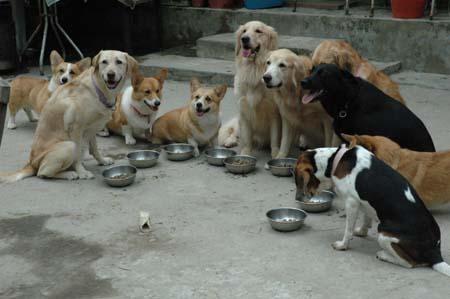 咱們家狗兒吃生鮮狗餐後的變化