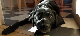 狗胰臟炎的成因、照料及飲食(下)