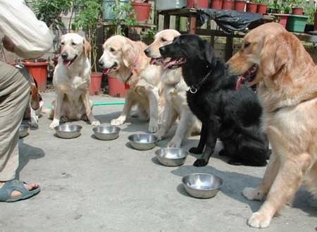 排排坐,吃飯飯