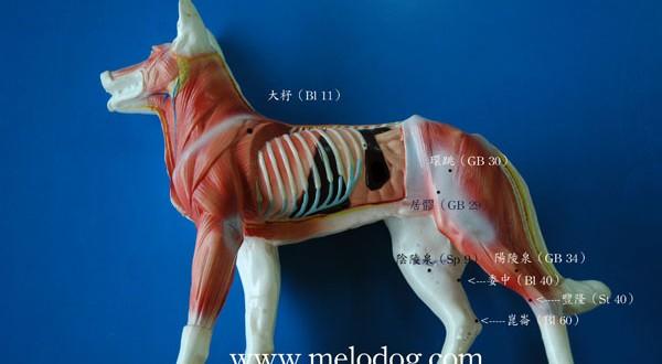 <一阳指与马杀鸡>髋关节发育不全的按摩穴位