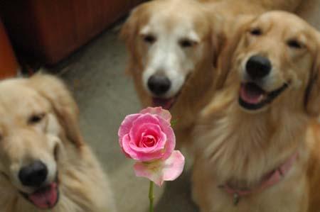 玫瑰人生La Vie En Rose
