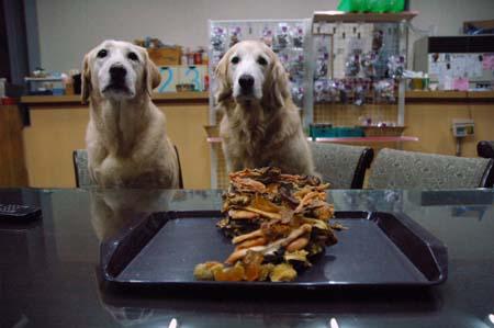 那些狗狗教會我們的事—Zoe,Mac九歲生日快樂!