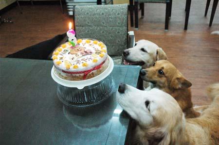 古曼八歲生日快樂
