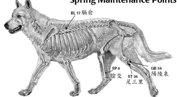 輔助照料—春天的行動—春季保養的指壓穴位