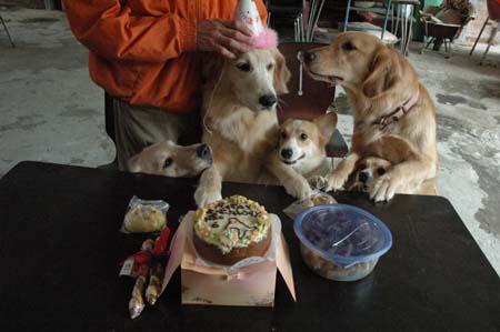 Mac寶貝六歲生日快樂