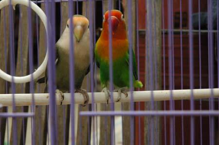 小鳥輕輕在歌唱