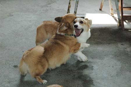 哈比人玩相撲