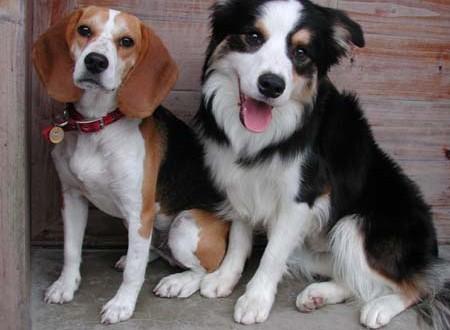 阿公心中的夢幻犬種