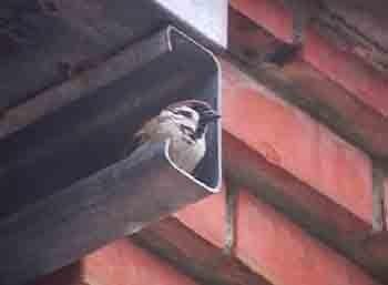鳥兒輕輕在歌唱