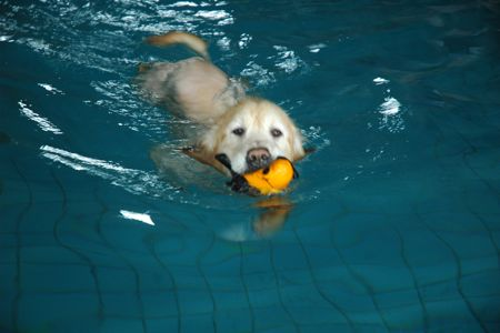 酷夏帶狗戲水去—20項狗兒游泳、戲水務必要知道的事