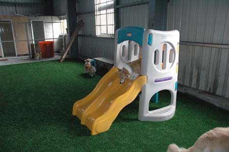 美樂狗阿公異想天開之犬專用溜滑梯