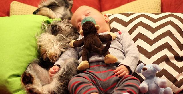 嬰兒與毛孩:世界上最可愛的生物。但要小心嬰兒用品對毛小孩的傷害!