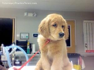 hackysack-puppy