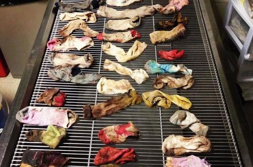 收好你的襪子、黃色小鴨跟燈泡!不然它們會出現在你家毛小孩胃裡!