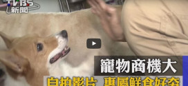 TVBS新聞採訪美樂狗、妙樂貓專業寵物鮮食