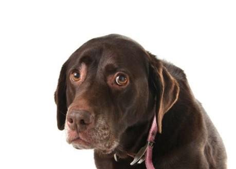 實驗發現,發炎性腸病IBD從狗的糞便即可確診