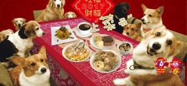 2017年美樂狗、妙樂貓寵物年菜開賣