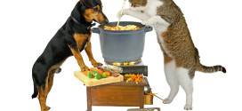(初步2)犬猫鲜食天然八步–毛孩鲜食八纲