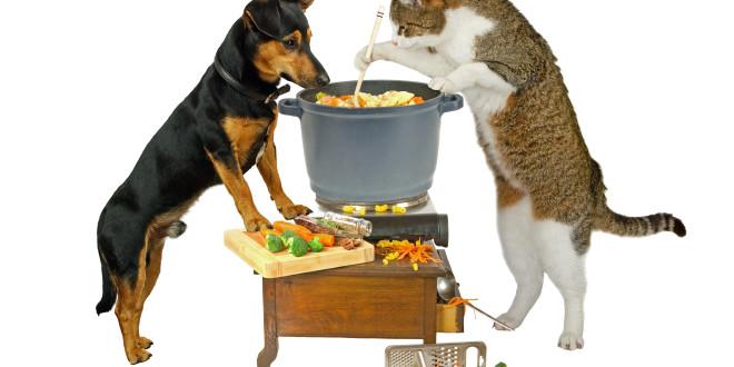 犬貓不喝水怎麼辦?怎麼騙牠喝水?(實務篇)