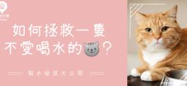 [毛孩知識家] 貓咪不愛喝水怎麼辦?