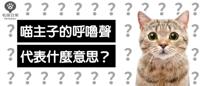 [毛孩知識家] 貓咪的呼嚕聲是什麼意思?