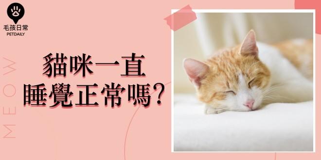 [毛孩知識家 ] 貓咪一直睡覺正常嗎?