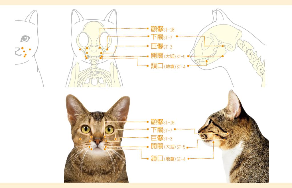 貓咪口炎-05