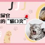 貓咪口炎-06
