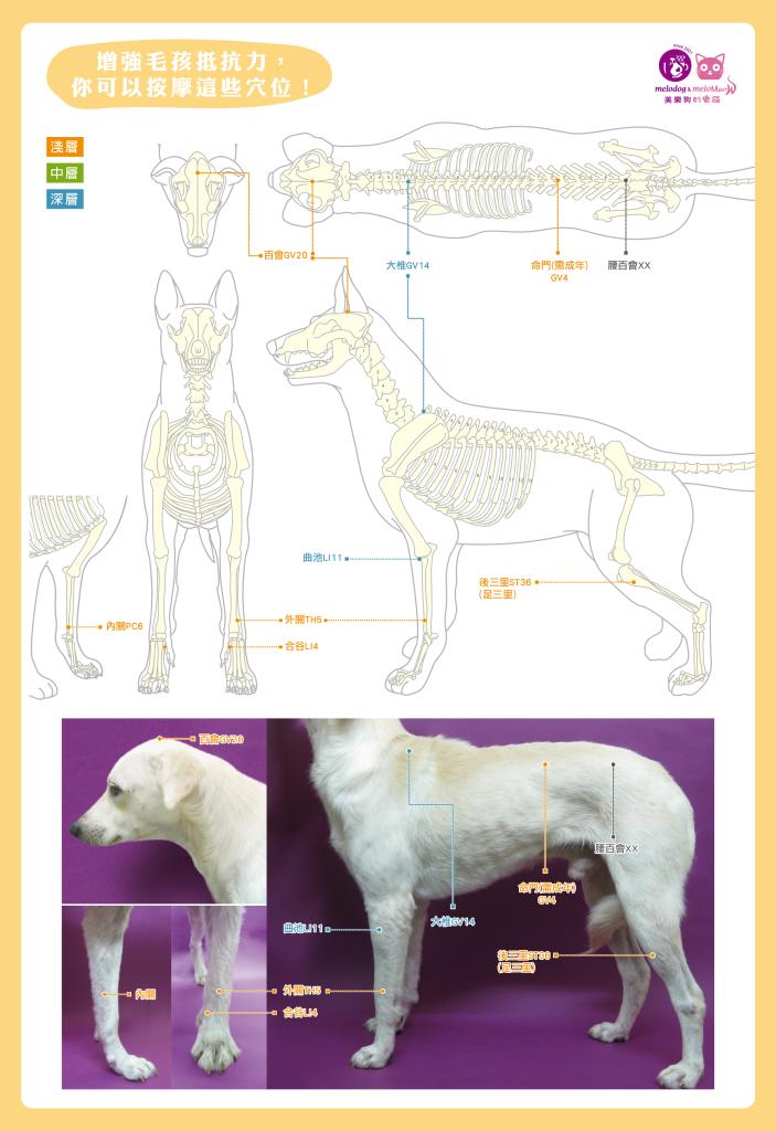 狗寄生蟲防治-03