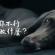 [毛孩行為訓練] 嗅聞能使狗狗更快樂!