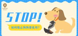 [毛孩行為訓練] 如何改善幼犬愛亂咬的壞習慣?