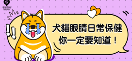 [毛孩知識家 ] 當心毛孩眼睛損傷!犬貓眼睛日常保健你一定要知道!