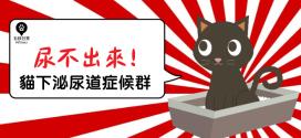 [毛孩知識家 ] 尿不出來!惱人的貓下泌尿道症候群!