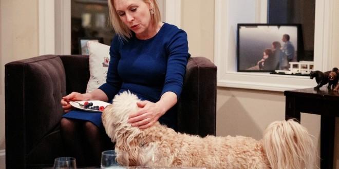 「科学怪犬」的悲鸣:拉不拉多贵宾狗的混种培育争议