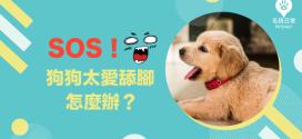 [毛孩知識家 ]狗狗太愛舔腳怎麼辦?