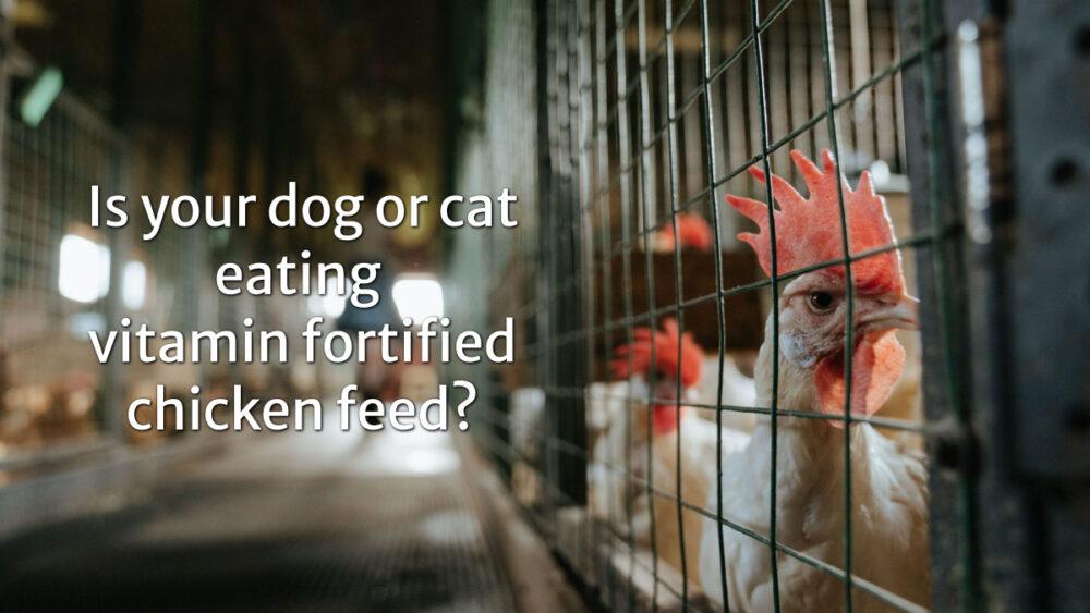 從雞豚飼料到毛孩吃的寵物食品僅是一步之遙