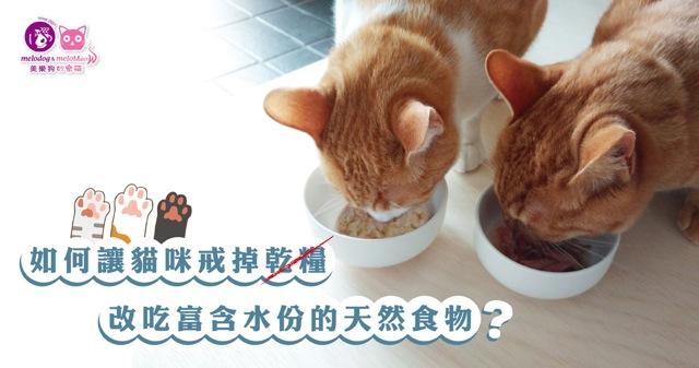 貓咪轉換成天然飲食(鮮食/生食)的技巧與原則