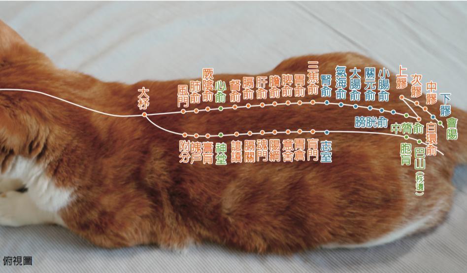 <一陽指與馬殺雞>毛孩犬貓經絡穴位圖集應用:舒緩毛孩拉肚子的穴位