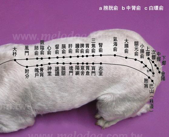 <一陽指與馬殺雞>毛孩犬貓經絡穴位圖集應用:犬貓糖尿病按摩穴位