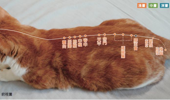 <一陽指與馬殺雞>毛孩犬貓經絡穴位圖集應用:犬貓腎臟疾病按摩穴位